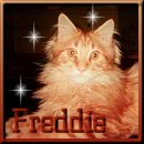 Dont't forget me, I am Freddie!